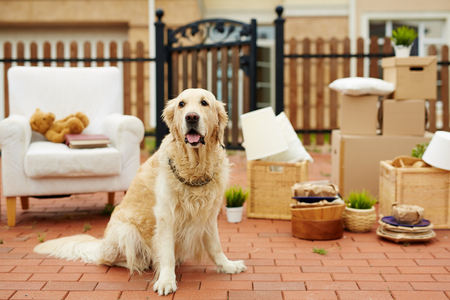 Pet sitting by new house with packed things on background